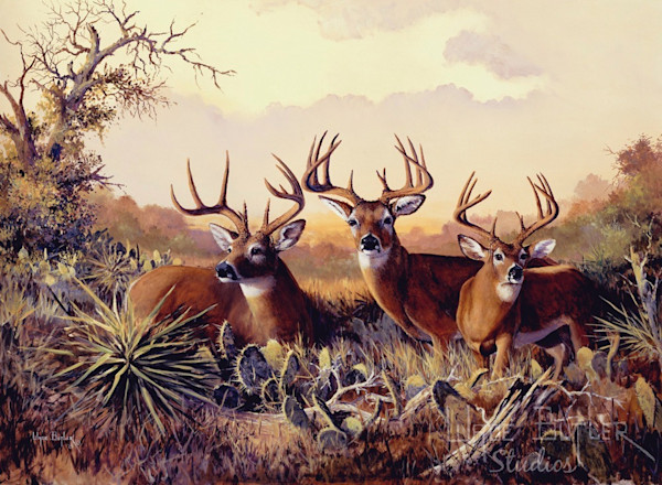 Whitetail Deer Art and Paintings For Sale