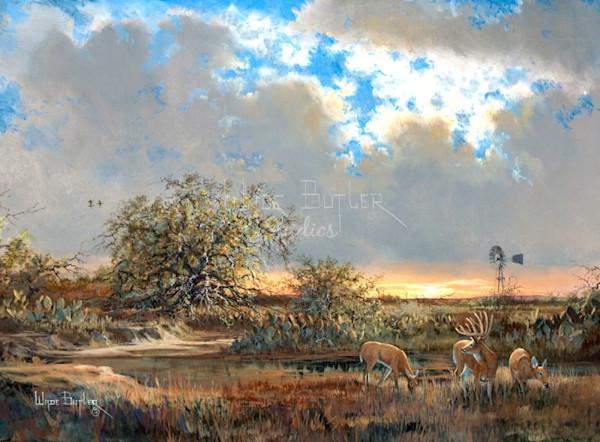 South Texas Whitetails-Wade Butler Studios/Wade Butler Art