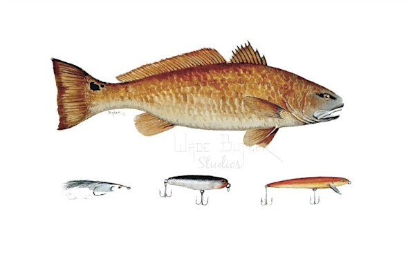 Redfish With Lures