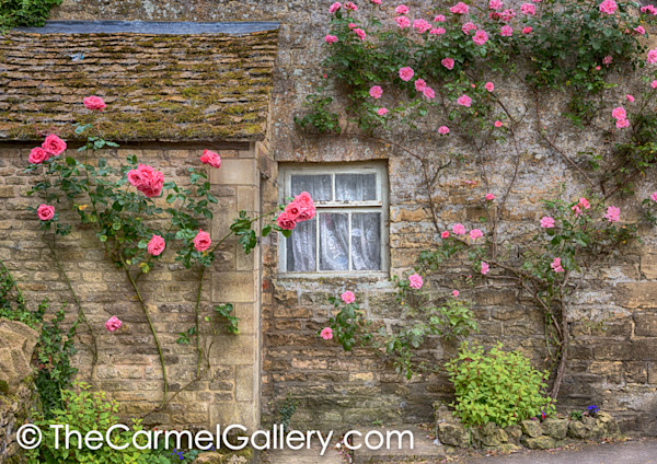 Cotswold Rose