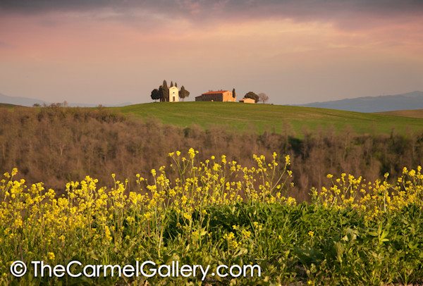 Mustard Bloom Tuscany