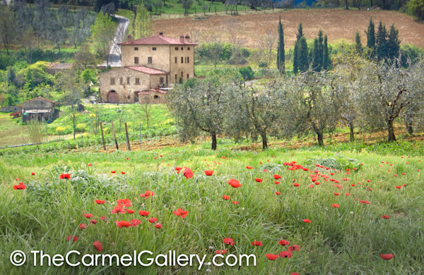 Spring Blossoms Tuscany
