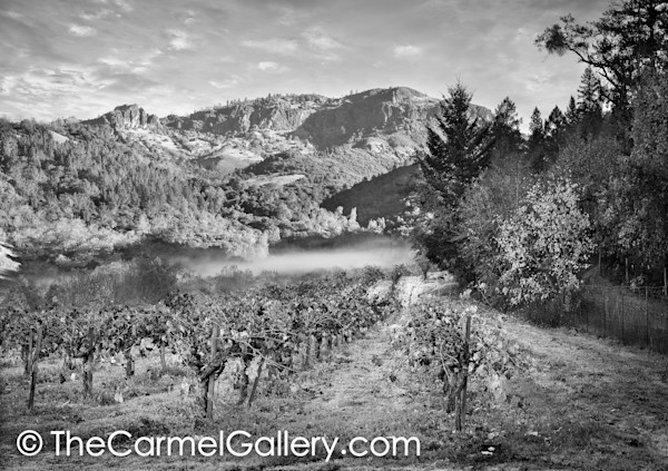 Autumn in Calistoga BW