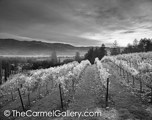 Sunrise Napa Valley BW