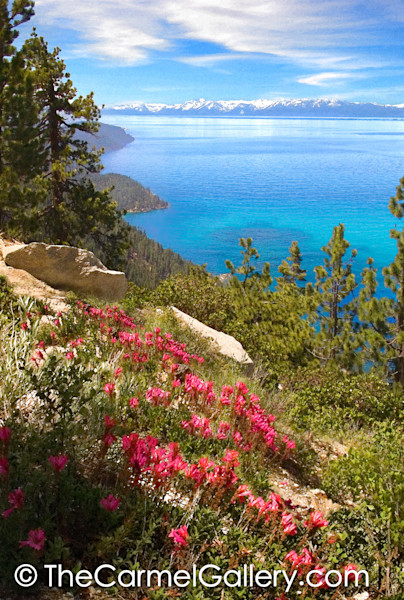 Lake Tahoe Penstemon