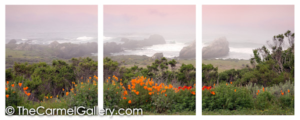 Spring Poppies California Coast ALL