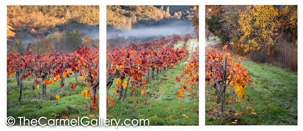 Autumn in Calistoga ALL