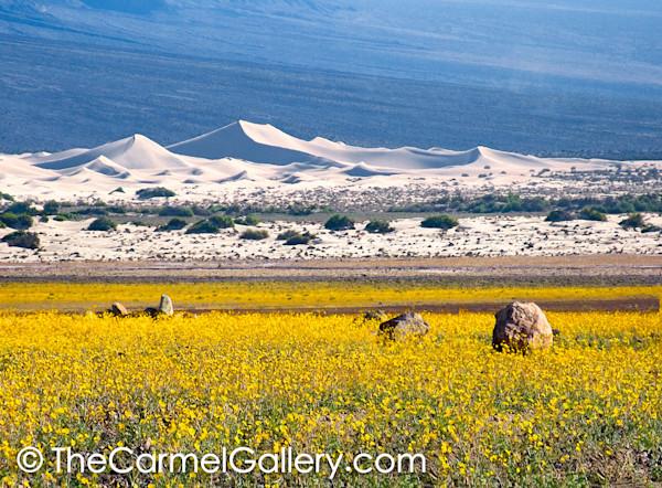 Desert Gold, Death Valley
