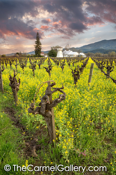 April Showers Napa Valley V