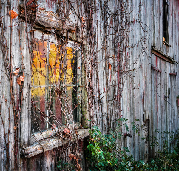 Vintage barn window as fine art/reflected fall foliage scenery off an old barn glass