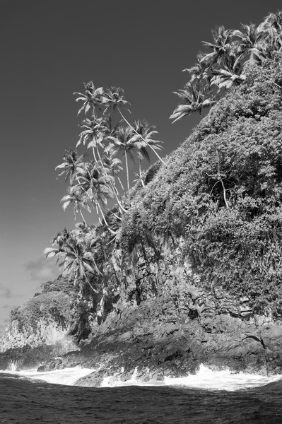 Palm Tree Cliffs BW, Cocos Island, Costa Rica