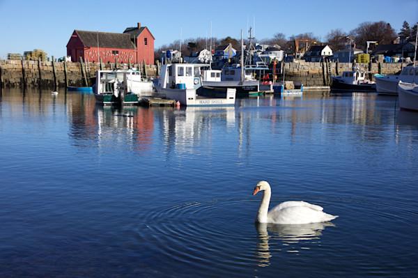 Swan Motif #1 Rockport Harbor