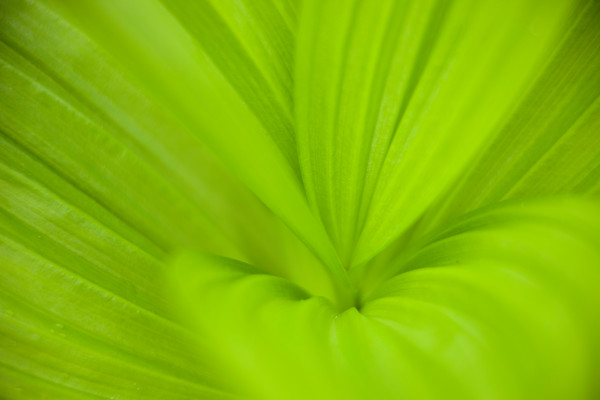 Abstract in nature fine art prints
