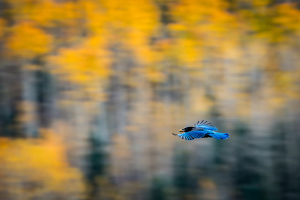 Shop for Fine Art Wildlife Photographs Colorado | Birds, Butterflies, Wolves, Horses, Goats and Moose.