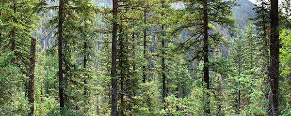Glacier National Park : gallery406