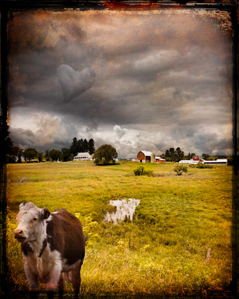 Heart-shaped Cloud and Cow