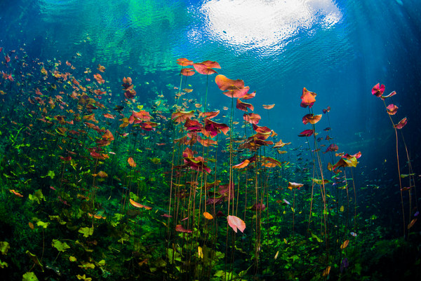 Underwater Sea Scapes