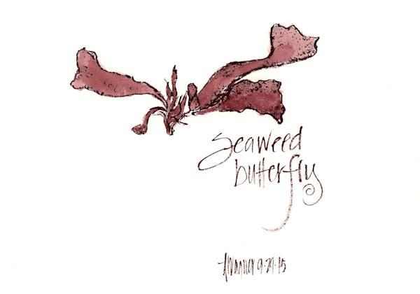 Seaweed Butterfly
