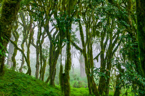 Through the Trees-Kenya