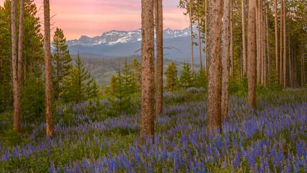 Purple Mountain Majestic