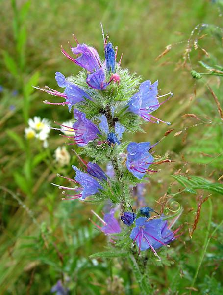 dewy purple flower close up