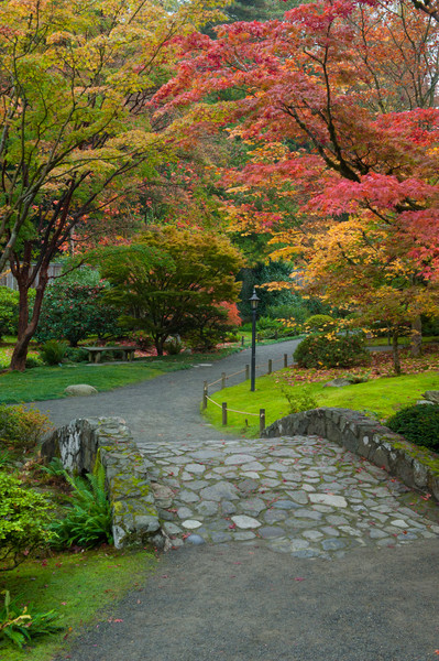 Fall colors in the Japanese Garden, Seattle