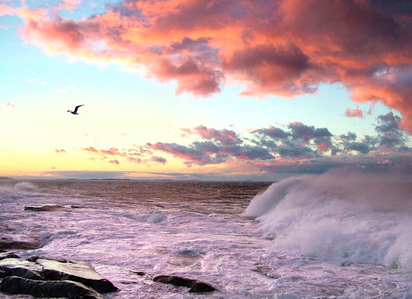 big waves, pink clouds, gull, sunset, seascape