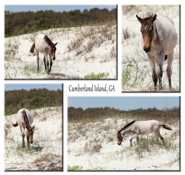 Horse of the Dunes
