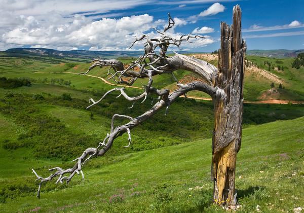 Northern Bighorns