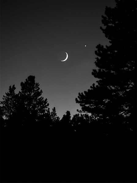 Crescent Moon and Trees - bw