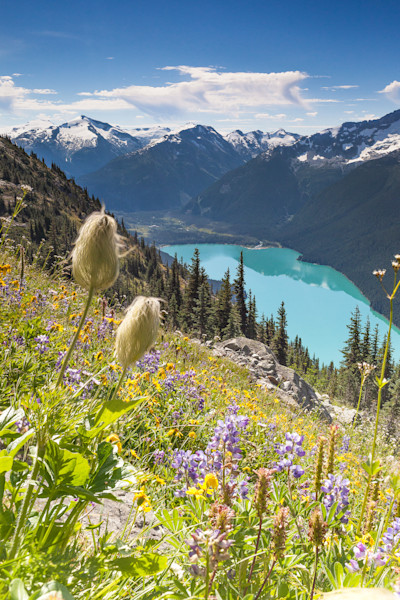 Alpine Bouquet Over Cheakamus Lake - Whistler