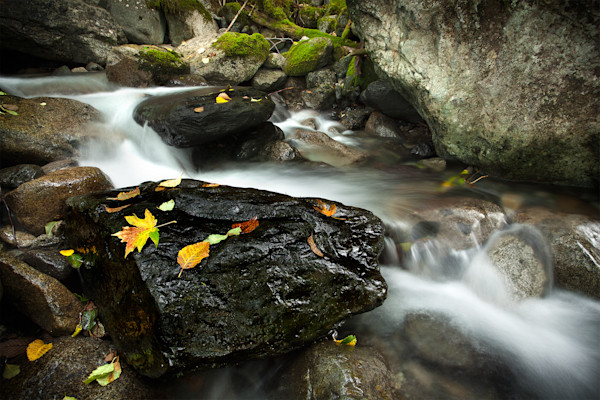 Turning Of The Colours - Squamish Stream