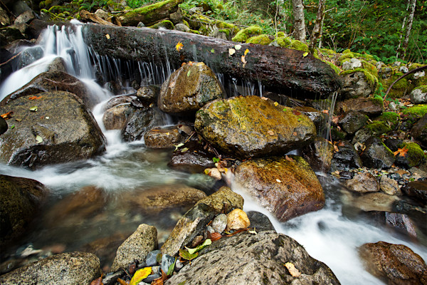 Autumn Leaves, Rocks And Water - Squamish Stream