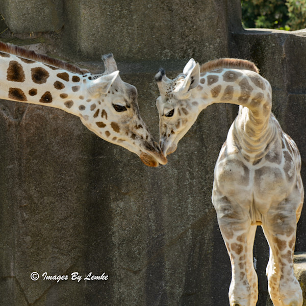 Mom and Son, Giraffe Tender Moment