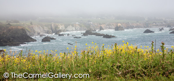 Mustard in the Mist, Sonoma Coast