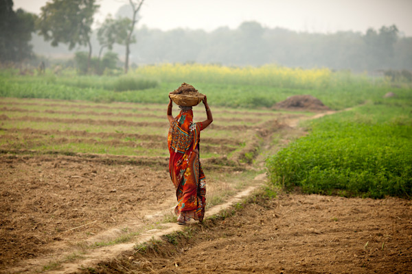 Lady Walking In The Fields - Varanasi