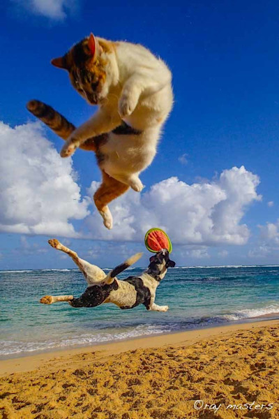 SEO Title : Funny photographs and uplifting paintings – available as Fine Art on Canvas, Paper, Metal & More
