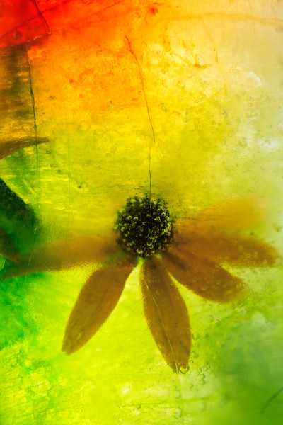 Suspended Black-Eyed Susan Abstract