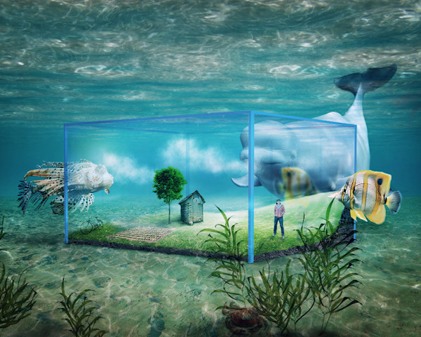 An underwater role reversals with fish on the outside looking at a human in an aquarium