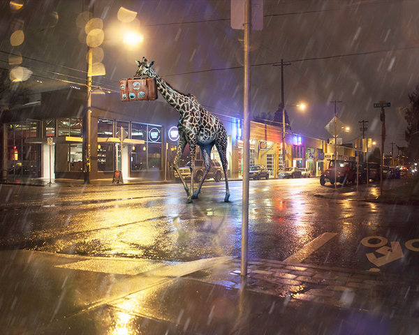 A giraffe carrying a suitcase strolls down a city street at night in this digital print by Kim Whittemore.