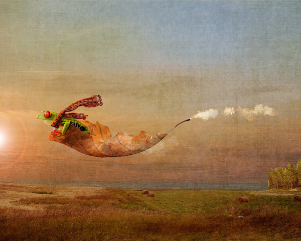 This little tree frog can hardly contain his excitement as he flies through the air on his leaf airplane in this digital artwork by Kim Whittemore.