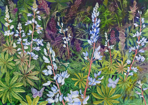 This gorgeous outdoor scene features lupine and butterflies, painted originally in watercolor and available in a limited edition giclee print.