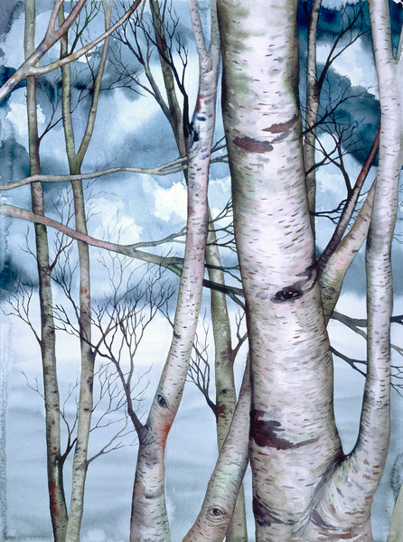 Winter landscape with birch trees on soft blue background is a limited edition print of an original watercolor