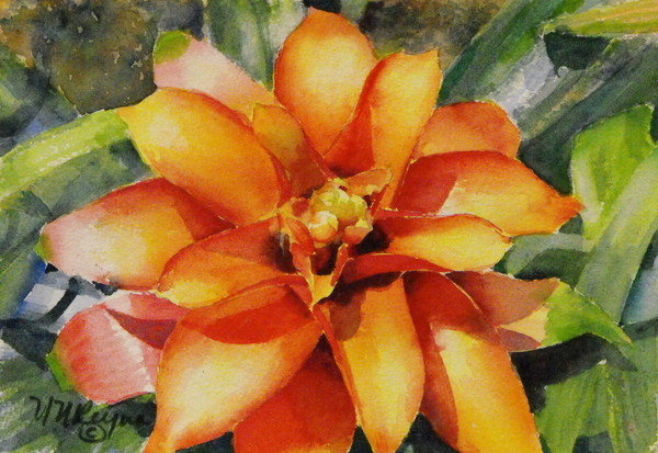 Bromeliad Sunset Art for Sale
