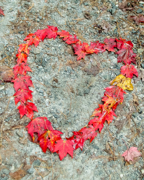 Leaf Wall Art: Heart's In The Forest