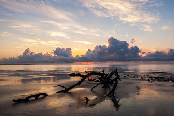 Driftwood Beach Sunrise