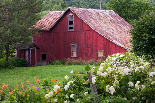 Barn Wall Art: Old Red Barn and Flowers