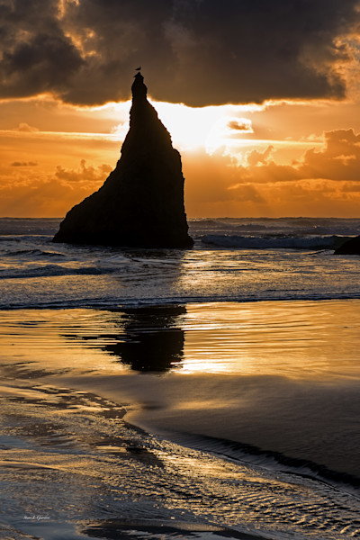 Bandon Seagull Sunset (151181BSND8) Photograph for Sale as Fine Art
