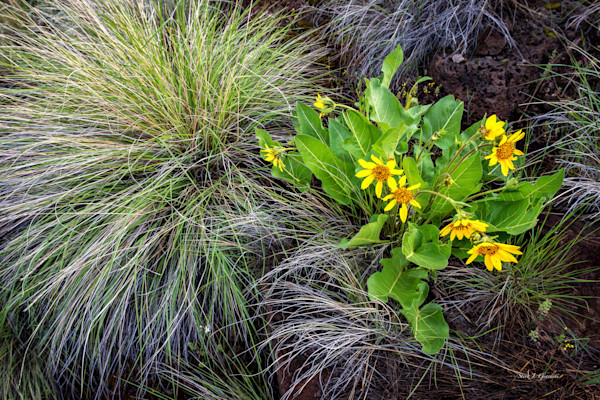 Wild Yellow (141226NWND8-S) Photograph for Sale as Fine Art
