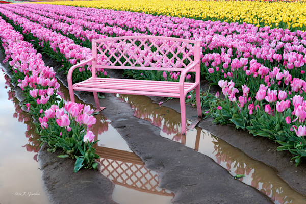 Tulip Bench II (161408LND8-P) Photograph for Sale as Fine Art